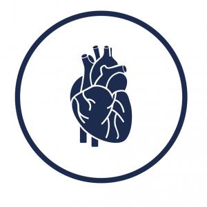 Illustrasjon av hjerte